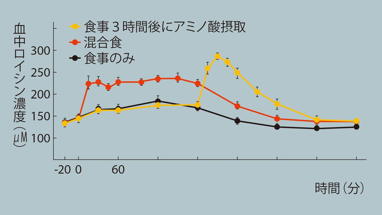 脂質が多いとアミノ酸の吸収速度が低下