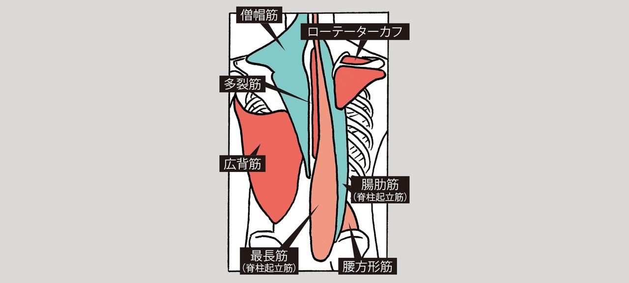 カラダ背面の筋肉や肩の細かい筋肉群