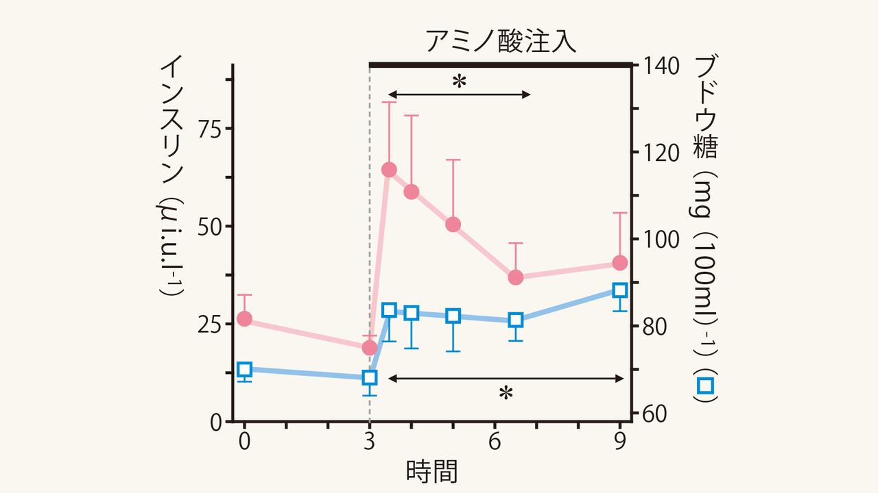 アミノ酸とインスリン濃度の関係を示すグラフ
