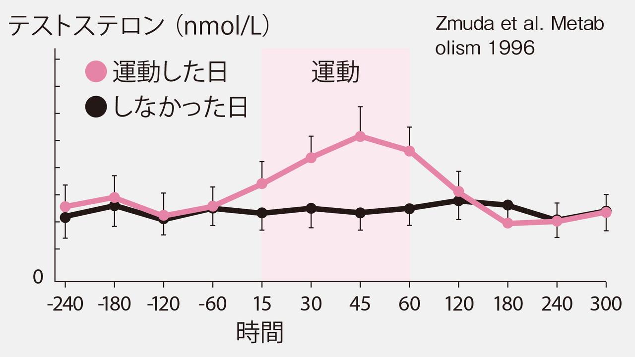 有酸素運動のテストステロン増加作用を示すグラフ