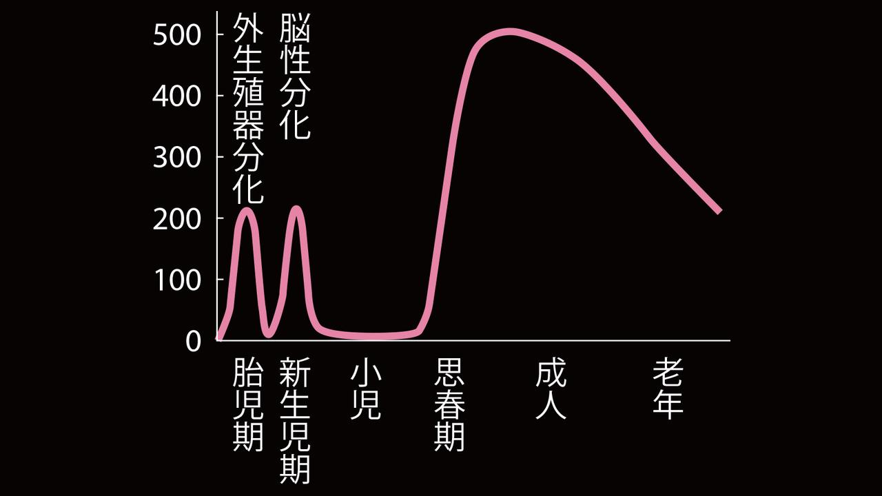 男性のテストステロン、血中濃度の変化を示すグラフ