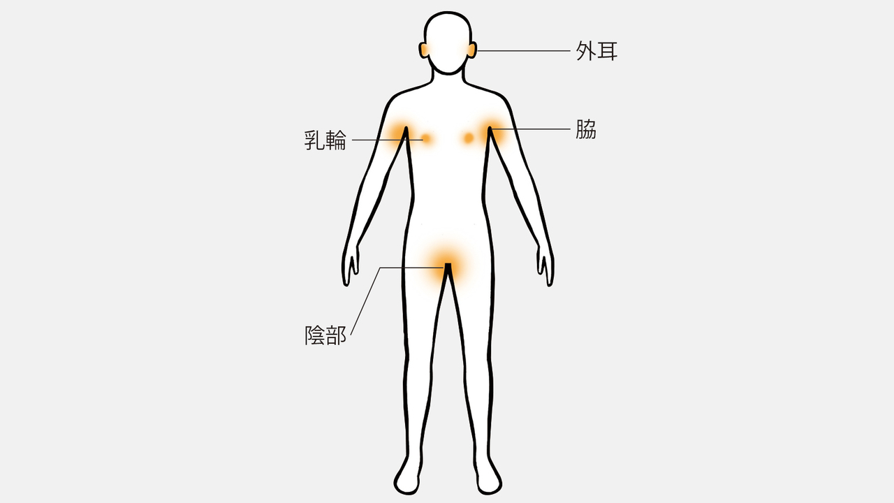 アポクリン汗腺が分布している部位