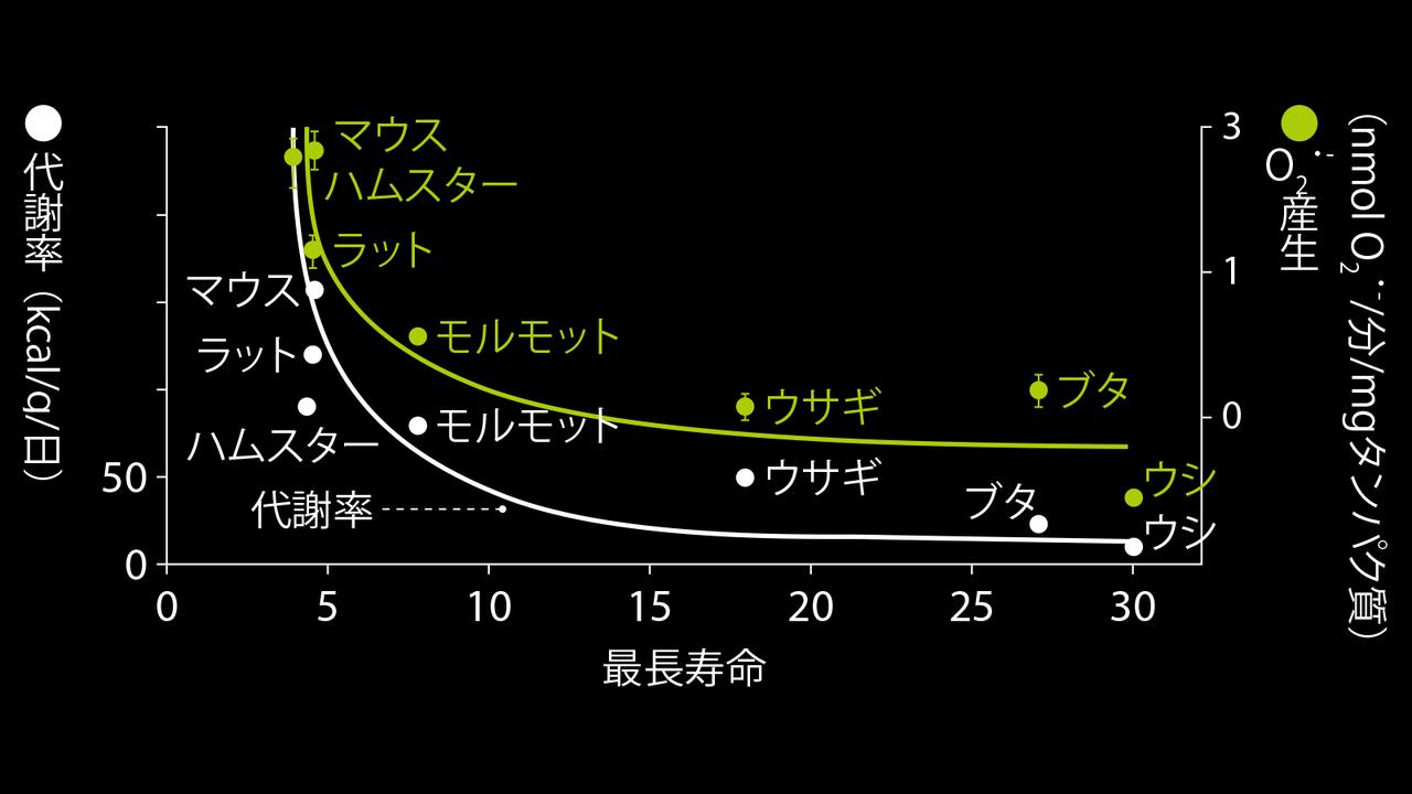 代謝率が高いほど、最長寿命は短い。