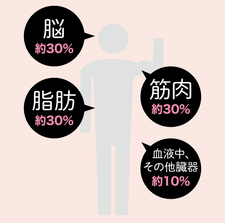 成人男性体内のコレステロールは普通は100~150g