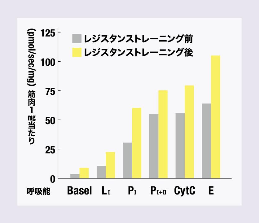 筋トレでミトコンドリアの性能が向上