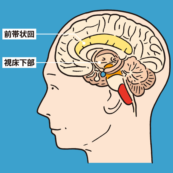 自律神経の中枢は脳の奥にある