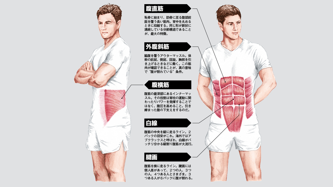 トレ 脂肪 お腹 男性 筋 の を 落とす