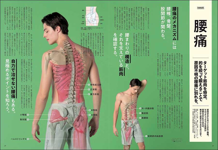『腰痛 ターゲット筋を特定。的を絞って鍛えることで原因不明の腰痛に別れを』(本誌P28掲載) 原因のわからないことが多い腰痛。セルフチェックでどの筋肉が問題なのか炙り出せば、痛みから解放される日も近いはず。
