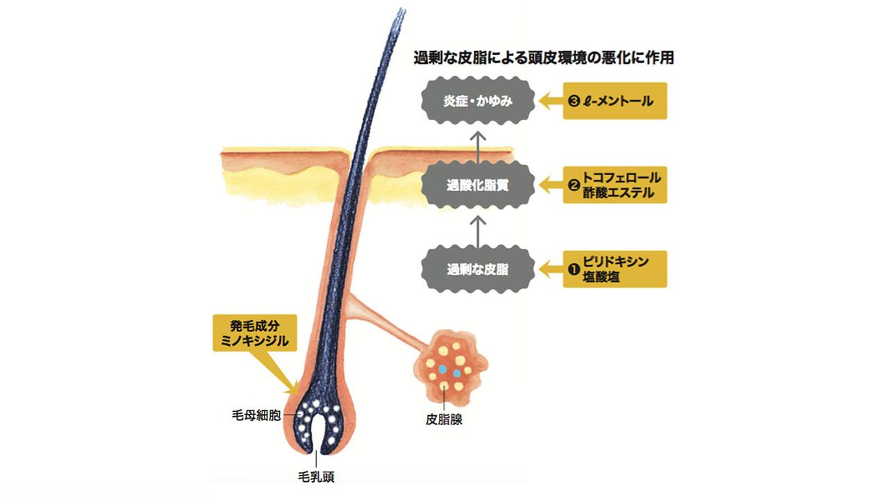 ミノキシジル+3つの発毛サポート成分で効果を発揮