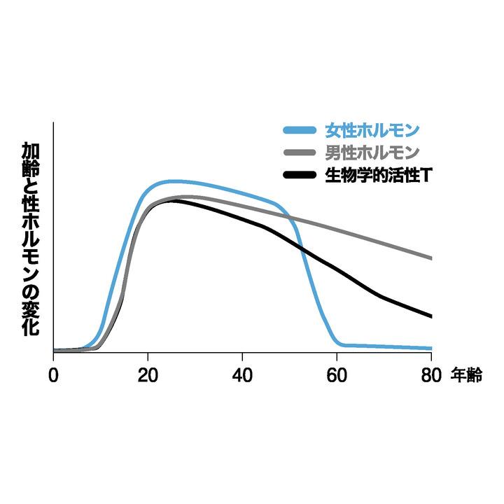 加齢に伴う性ホルモンの変化